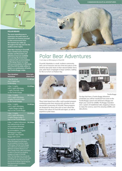 Polar-Bear-Adventures-small