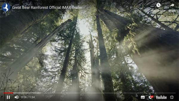 The rarest bear in the world – Great Bear Rainforest Film